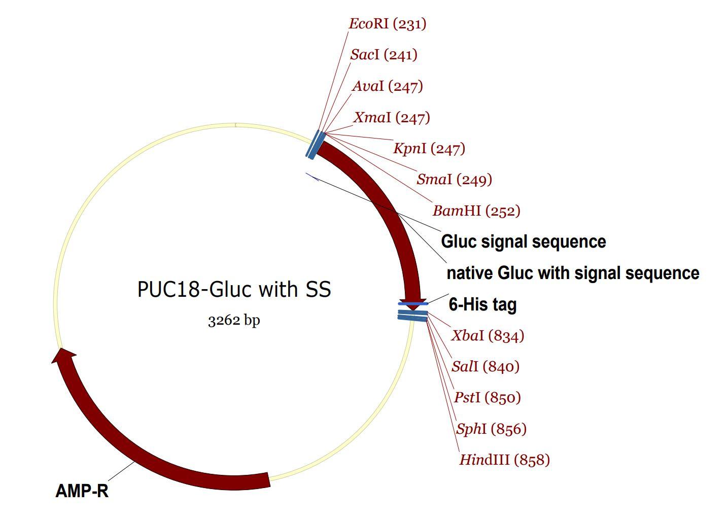 201 pUC18 SS- Gluc map