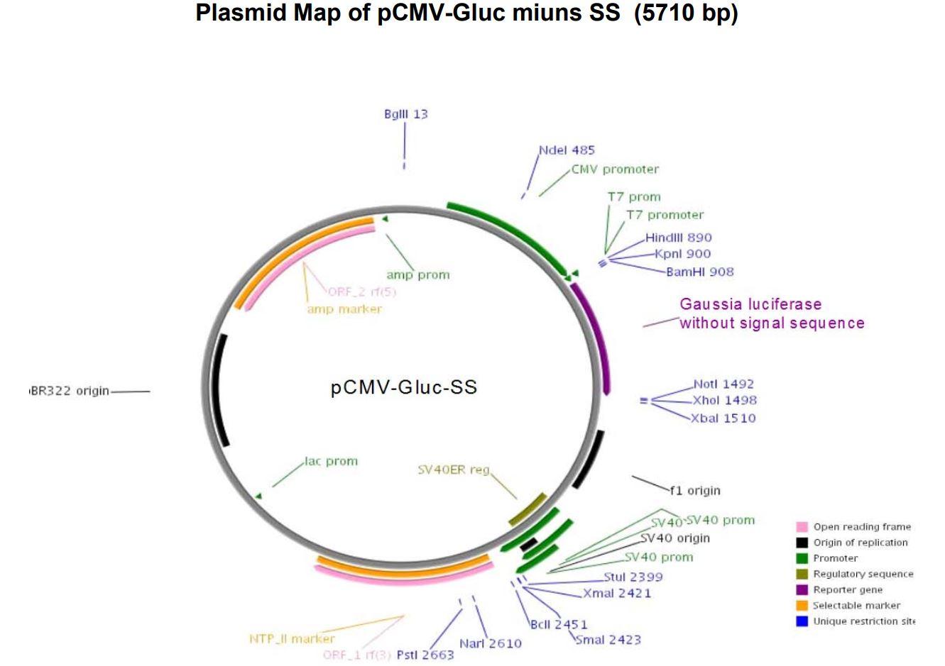 209 pCMV- Gluc-minus SS map