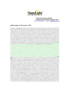 109 pCMV-humanized-R_M_GFP sequence_map