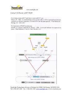 120 Plasmid_pART7_PtGFP info PDF